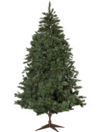 Virginia Pine 7.5' (198cm) Christmas Tree $399.00