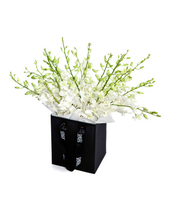 Heavenly Orchids (10 Stems)