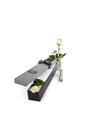White Premium Long Stem Rose